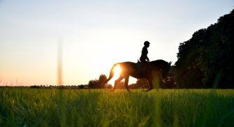Paseos a caballo en la Ribera del Duero - La Galinda