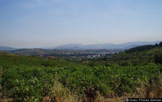 Viñedos - Cacabelos