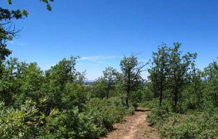 Sendero Camino de la Ermita de Hontanares - Riaza - Segovia