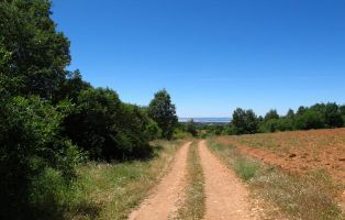 Tramo final del sendero - Camino de Hontanares - Riaza