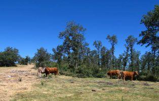 Pradera del Collado de Riofrío de Riaza - Camino de Hontanares