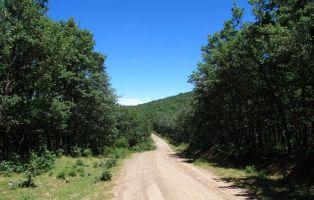 Pista forestal Riofrío de Riaza - Hontanares - Riaza