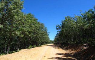Robledal de la Sierra de Ayllón - Pista forestal Riofrío de Riaza