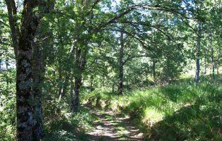 El Camino de Riofrío - Senderismo Riaza