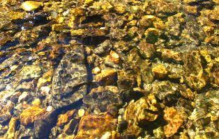 Siguiendo el curso del Río Riaza - Senderismo Segovia