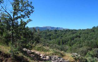 El Camino de Riofrío por el robledal de la Sierra de Ayllón
