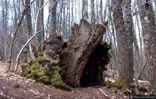Bosque de Honfría
