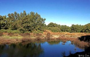 Laguna Cernea