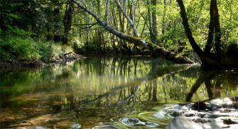 Ruta Guiada Hoces del Alto Ebro y Rudrón