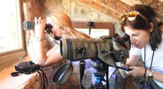 Lobos y buitres ribera del Duero - Abubilla Ecoturismo