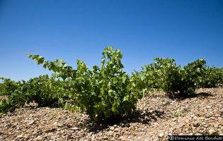 Viñedos - Tierra del Vino