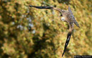 Ornitología chozas