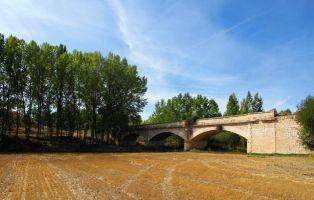Ruta del Riaza por la Ribera del Duero - Vegetación de ribera - Torregalindo