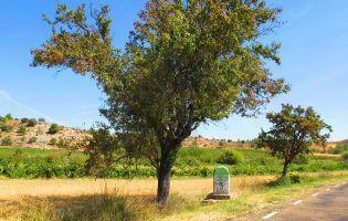 Ruta por la Ribera del Duero occidental - Burgos