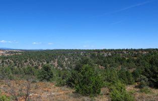 Ruta de las Sabinas - Cañón del Río Lobos y La Fuentona