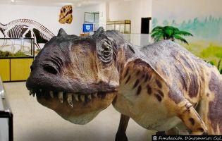 Museo Arqueológico Paleontológico - Salas de los Infantes