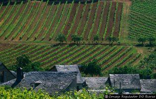 Ruta del vino Bierzo