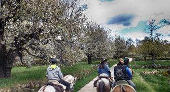 Paseos a caballo Gredos
