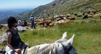 Rutas y paseos a caballo en la Sierra de Gredos