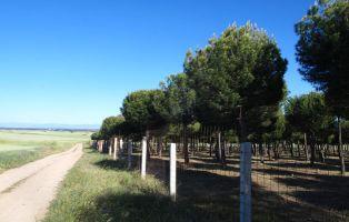 Tierra de Pinares - Segovia