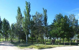 Laguna de la Llosa - Fuentepelayo