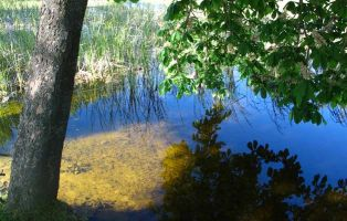 Humedal de la Llosa - Tierra de Pinares