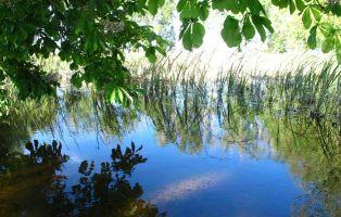 Gran valor ecológico - Laguna de la Llosa