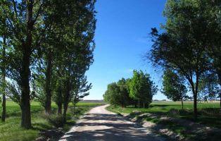 Sendero en Fuentepelayo - Segovia