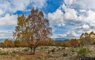 Ruta de los Tejos de Brañarronda y El Villar de Santiago