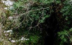 Torca de la Hiedra - Hontoria del Pinar