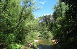 Bosque de ribera - Río Cega - Segovia