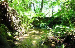 Bosque de ribera - Senderismo Segovia