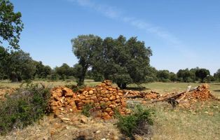 El Encinar de Saldaña - Cañada Real Soriana Occidental