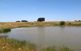 Tramo final del sendero - El Encinar de Saldaña de Ayllón - Fresno de Cantespino - Segovia