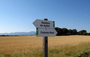 Tramo hacia la Cañada Real - Sierra de Ayllón - Senderismo Segovia