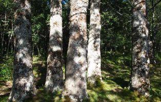 'Las Cinco Maderas' Árboles para la Diversidad - Gestión Forestal Sostenible - Segovia