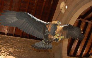 Qué ver en Pedraza - Centro Temático del Águila Imperial