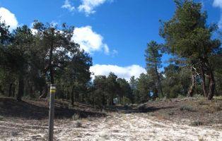 Sendero bien señalizado - Tierra de Pinares