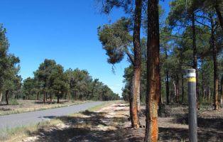 Pista forestal asfaltada Autovía A601 - Zarzuela del Pinar