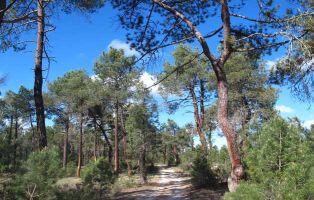Tierra de Pinares - Cuéllar