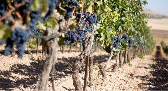 Museo del vino Ribera del Duero Emina