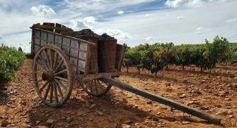 Enoturismo Tierra de León - Pardevalles