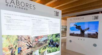 Qué hacer en Peñafiel - Museo del vino