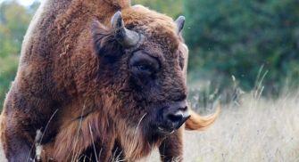 Centro de interpretación del bisonte europeo - palencia