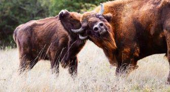 Visita Reserva del Bisonte Europeo