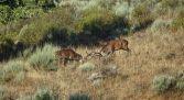 Ver Lobos en la Sierra de la Culebra