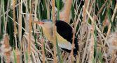 Ruta ornitológica Actividades Zamora