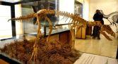 Museo de Dinosaurios Sierra de la Demanda