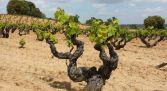 Cooperativa vino - Gumiel de Izán