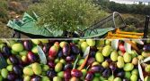 Visita Almazara Ecológica Aceiteros del Águeda